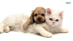 Image sourced from http://wallpapercave.com/puppies-and-kittens-wallpaper